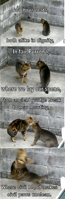 cats and romeo and juliet….wonderful