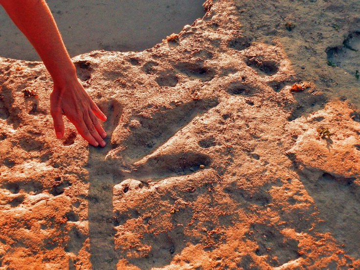 "☩ Dinosaur Footprints ~ Broome Australia An 80-kilometre ""dinosaur trackway"" in the Kimberley region of Western Australia is a scientific treasure, unparalleled anywhere else in the world."