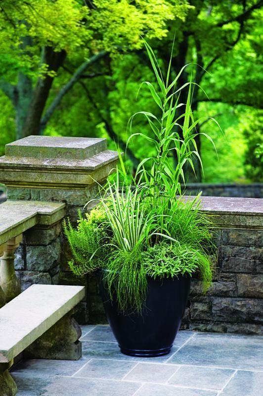 Pile Rohr Ziergras Topf dekorative Gartengestaltung – #decorative #Garden #Gestal …