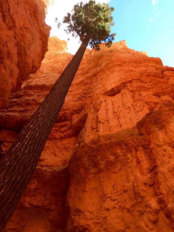 This Bryce Canyon