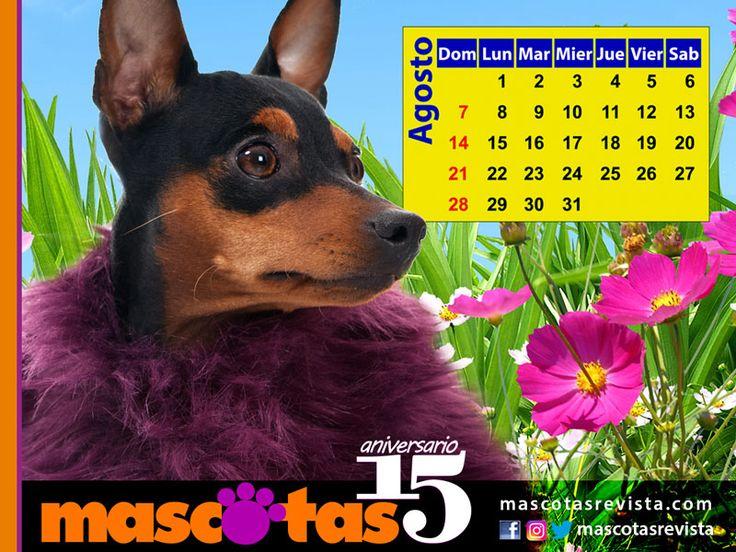 Calendario de Agosto 2016 - Mascotas Revista