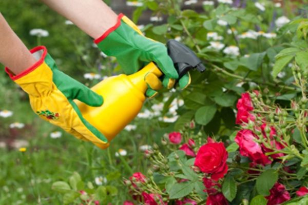 Az ecet körülbelül egyidős a civilizációval, a kertben történő használata pedig igazán hasznos csodaszerként szolgál, számos drága kerti vegyszer kiváltható ugyanis a használatával. A legszebb az e…