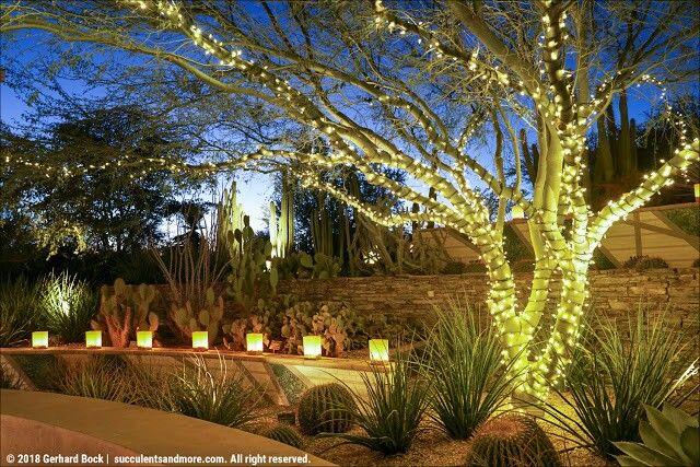 Electric Desert After Dark At The Desert Botanical Garden