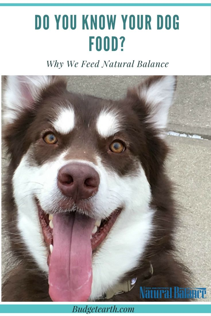 Do you know the ingredients in your dogs food & how it was tested? See why our family believes in Natural Balance dog food for every meal here! #WeBelieveinNB #sponsored