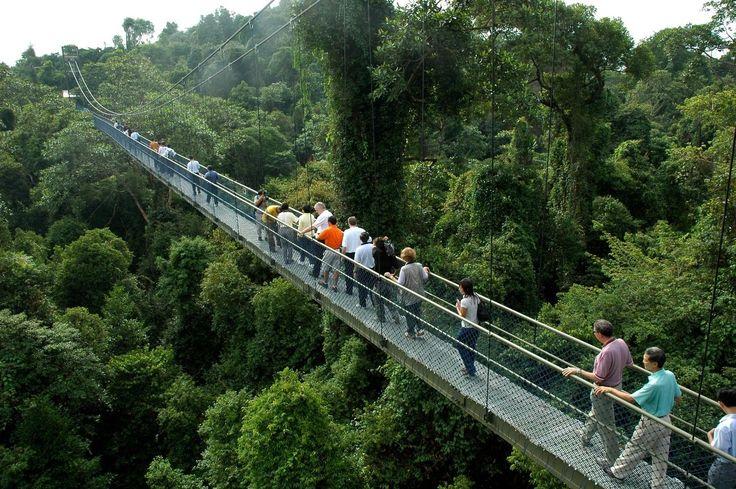 Central Nature Reserve Spádová - parky a prírodné rezervácie - záhrady, parky a príroda - National Parks Board