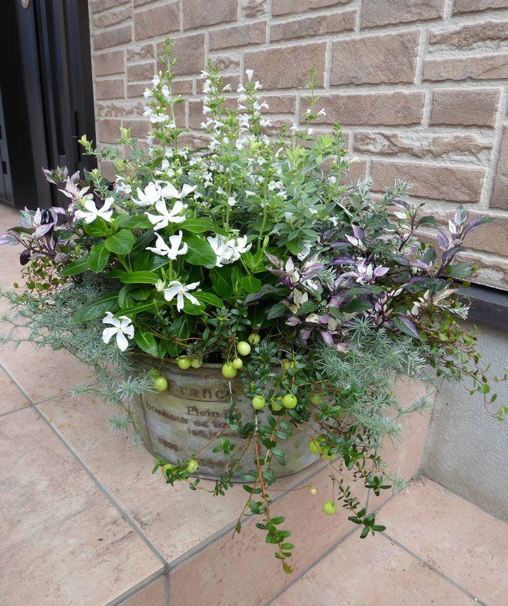 ニチニチソウやカラミンサの白い小花をちりばめて涼しげな作品に仕上げました。
