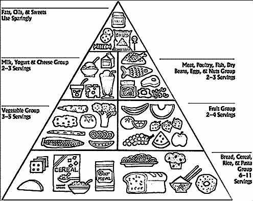 food pyramid coloring page coloring pages new  food