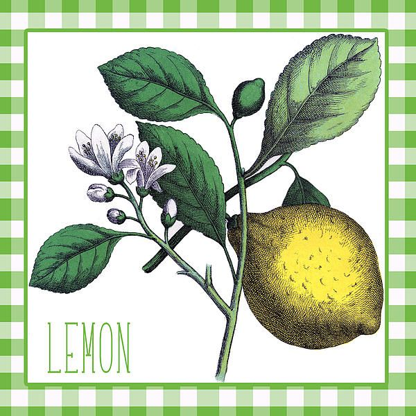 Cute gingham border with a vintage botanical illustration of lemons and lemon flowers. The text reads simply LEMON