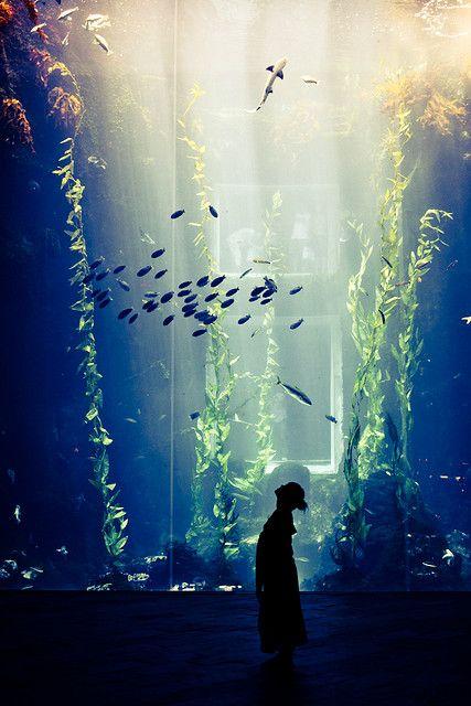 aquarium                                                                                                                                                                                 もっと見る