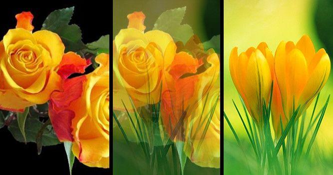 Ce floare se potrivește cu personalitatea ta? - Sillyswing