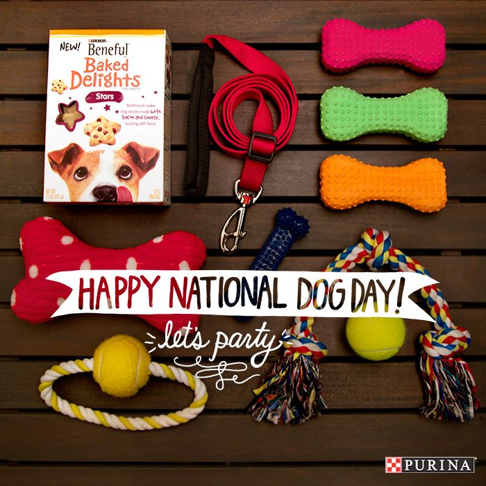 National Dog Day is all about treating your dog. From dog toys to dog treats - celebrate this holiday with your best friend!