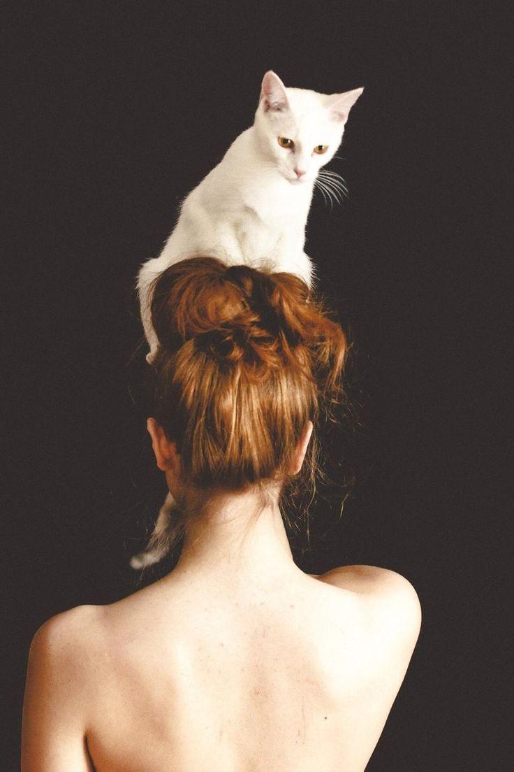 рисунок на голове кошки фото данный раздел или