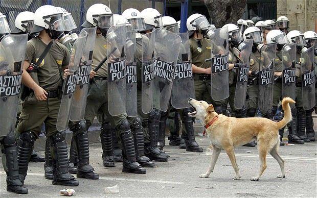 RIOT DOG aka Loukanikos- man's best friend or modern day hero? OR BOTH? <3
