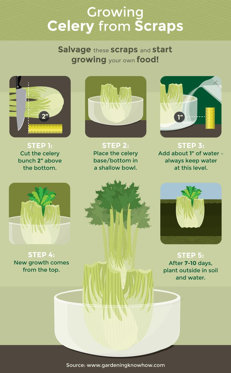 How To Regrow Your Veggies From Scraps  http://www.rodalesorganiclife.com/food/how-to-regrow-your-veggies-from-scraps?cid=soc_Rodale%2527s%2520Organic%2520Life%2520-%2520Rodale%2527s%2520Organic%2520Life%2520-%2520RodalesOrganicLife_FBPAGE_Rodale%2527s%2520Organic%2520Life__