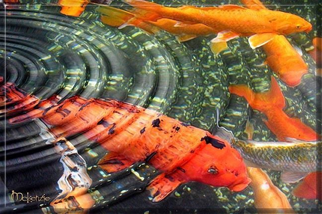 Compare Prices on Koi Pond Art- Online Shopping/Buy Low Price Koi ...