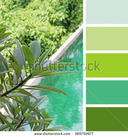 Pool in the Jungle