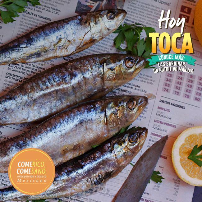 Si quieres comer bien, lleva sardinas a tu mesa. Son ricas en vitamina A y su carne es una de las más sabrosas y aromáticas. Puedes prepararlas fritas, a la plancha, directo de la lata, al horno, etc.  ¡Simplemente deliciosas!  #HoyToca  #Sardinas  @conapesca @sagarpamx