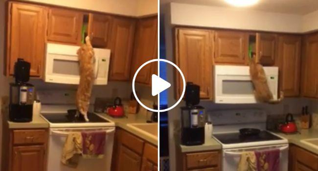 Missão Impossível Versão Gato