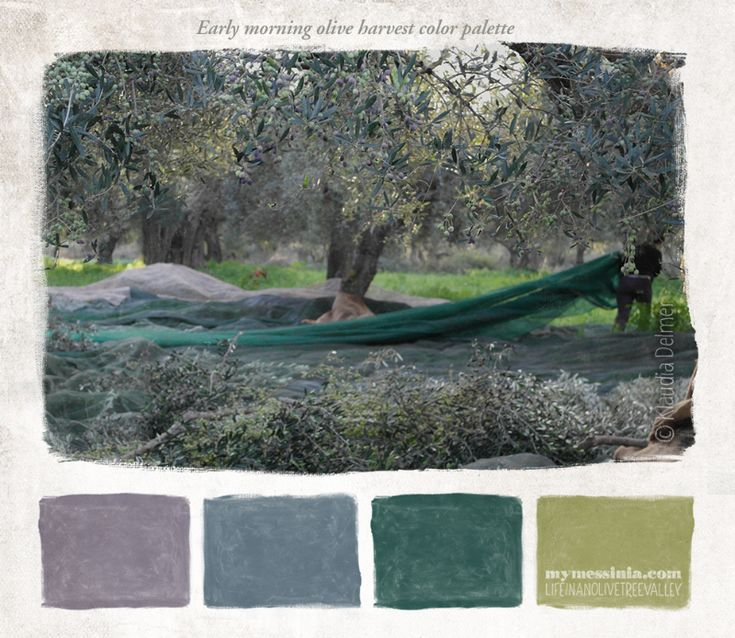 Early morning olive harvest palette