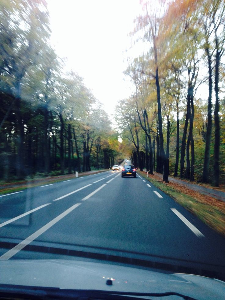 On the road. Crossing the Veluwe.