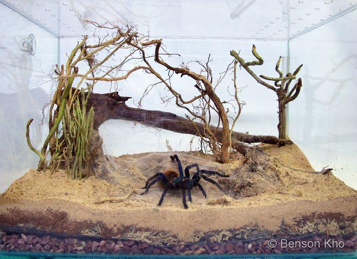 пауки в террариуме картинки год