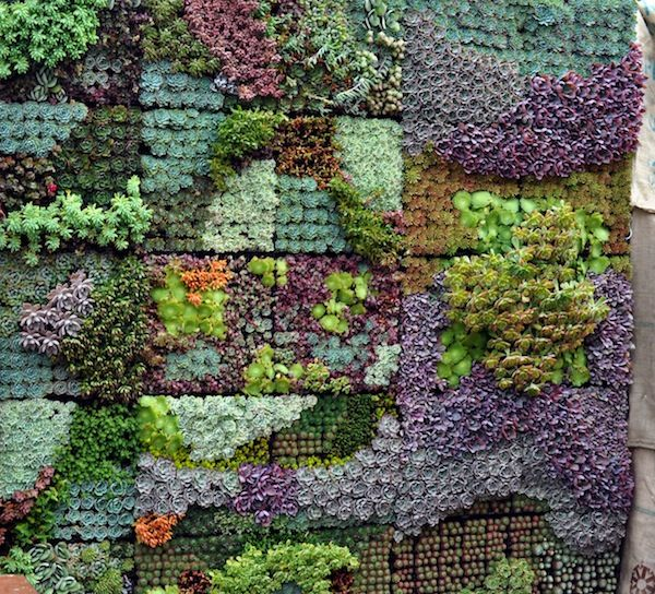 Vertical Garden Wall provides structure to the Victorian  Garden while tieing the colors of the house to the plants.  Construct the shape and color of the windows from the plantings.