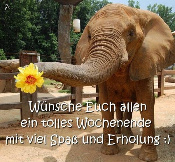 Pin Von Michaela Wagner Auf Elefanten Süßeste Haustiere