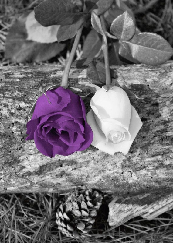 Black white purple rose flower art love the black white the way the color
