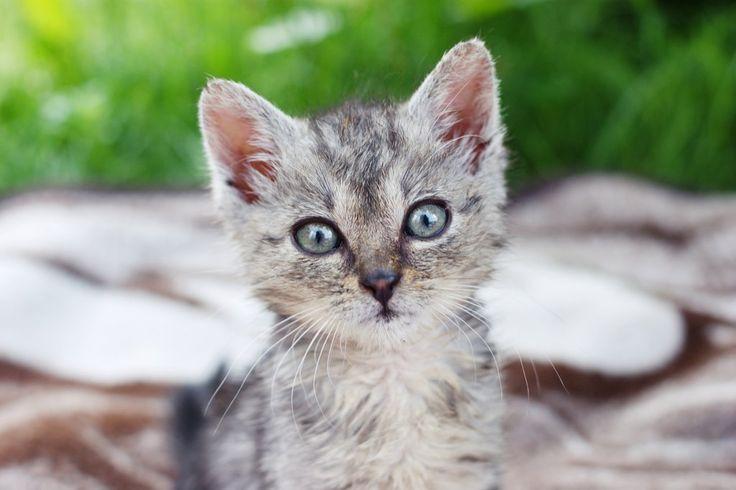 Advice on how to buy a kitten.  Lulu & Robbie Blog