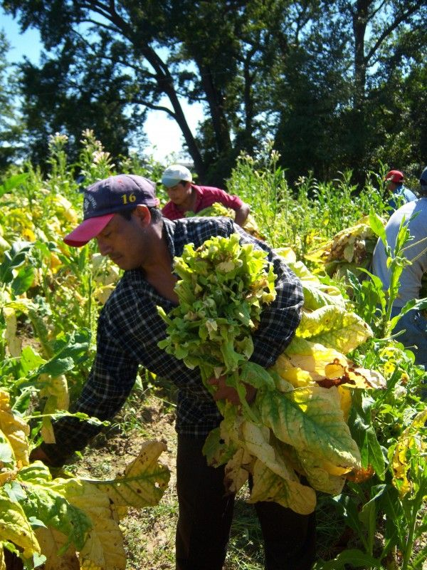 Congressmen and Parliamentarians to Join Farmworker Union in Examination of Labor Rights Abuses & Intimidation in U.S Tobacco - http://www.beachcarolina.com/2014/07/24/congressmen-and-parliamentarians-to-join-farmworker-union-in-examination-of-labor-rights-abuses-intimidation-in-u-s-tobacco/ Dudley, North Carolina- On July 26th U.S Congresswoman Marcy Kaptur (D-OH) and British Members of Parliament Ian Lavery and James Sheridan will participate in a fact-finding delegation t