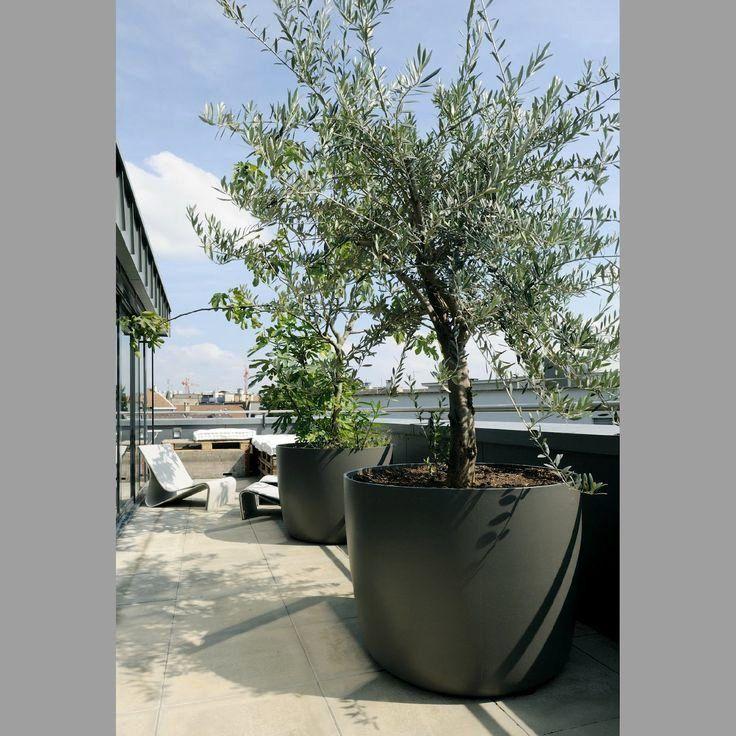 Grosse Pflanzkubel Fur Baume Gartenmobel Garten Terrasse Gestalten Dachterrasse Pflanzen