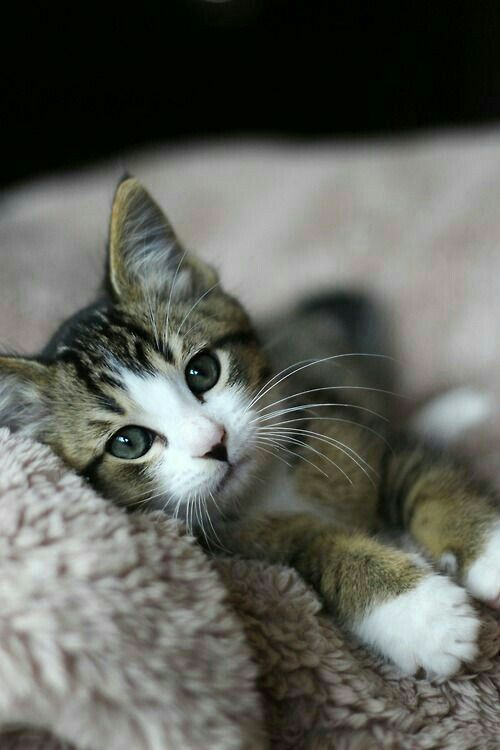 Looks just like my baby when she was little Tap the link for an awesome selection cat and kitten products for your feline companion!