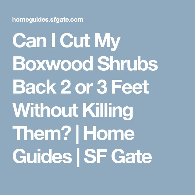 39 Ingenious Diagrams For Your Home And Garden Projects: 17 Best Ideas About Boxwood Shrub On Pinterest