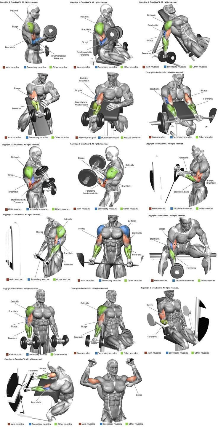 327082666917d0b04ff85f396d2476df.jpg (736×1445) (scheduled via http://www.tailwindapp.com?utm_source=pinterest&utm_medium=twpin) #musclebuilding