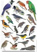 Las Aves que Viven en Chile: La Clasificación de las Aves
