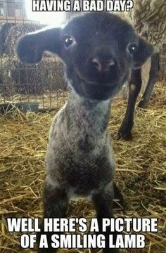 Having a bad day? Here's a picture of a baby goat smiling(:
