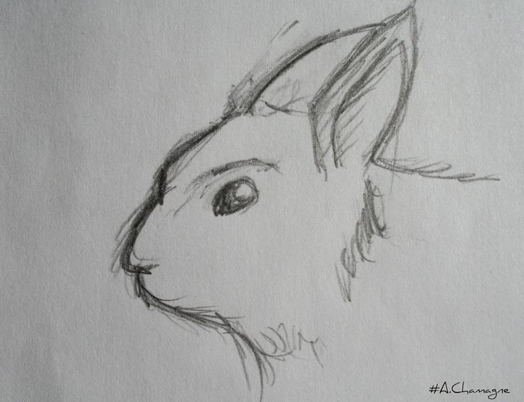 Lapin Dessin Passion Of Drawing Audrey Chamagne