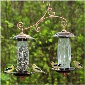 NeatOGardens Sip, Food And Drink, Pets Birds, Birds Feeders, Bird Feeders, Perky Pets, Accent Decor, Seeds Birds, Wild Birds