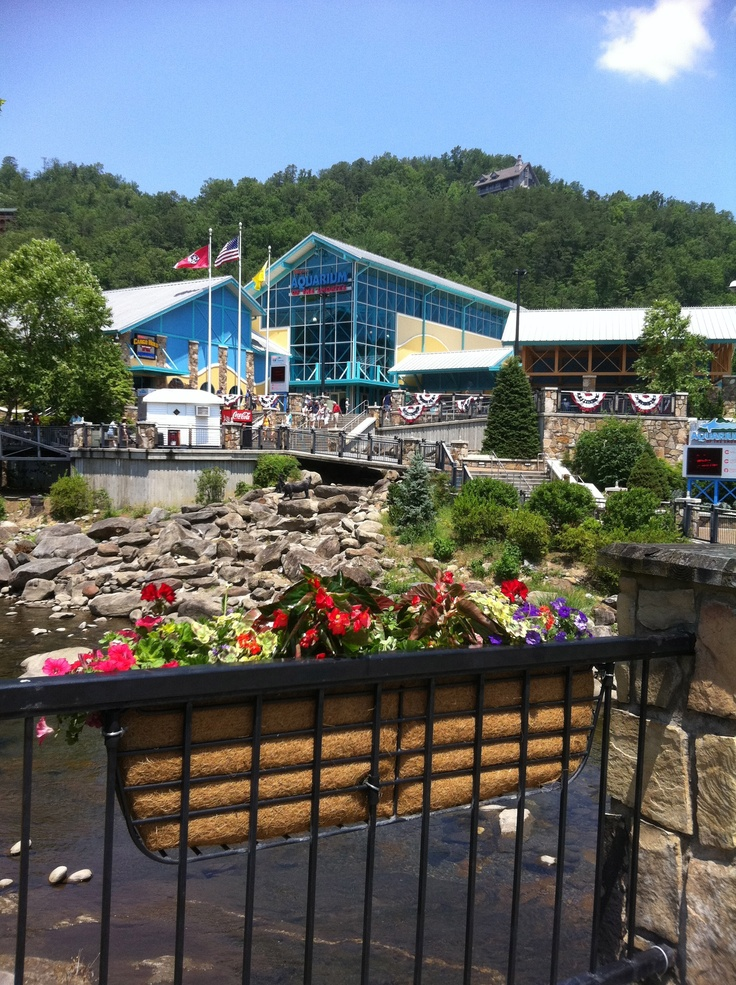 24 Best Ripley 39 S Aquarium Of The Smokies Images On Pinterest