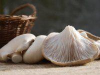 Pilzarten auf einen Blick   EAT SMARTER
