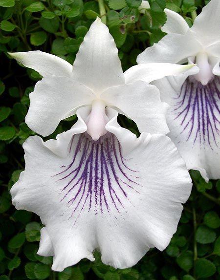 ❧❧ #aromabotanical