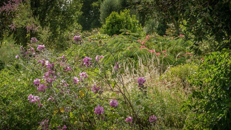 Paradise garden - Shot at the Isle of St Germain.