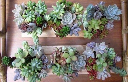 Zzzzzzzzzzzzam 626723 6674133 638516 plantas y macetas for Utilisima jardineria
