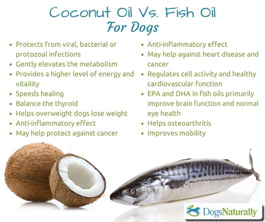 25 best ideas about fish oil benefits on pinterest fish for Fish oil for dogs