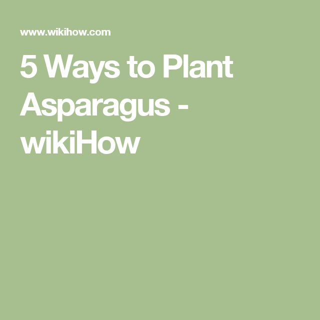 5 Ways to Plant Asparagus - wikiHow
