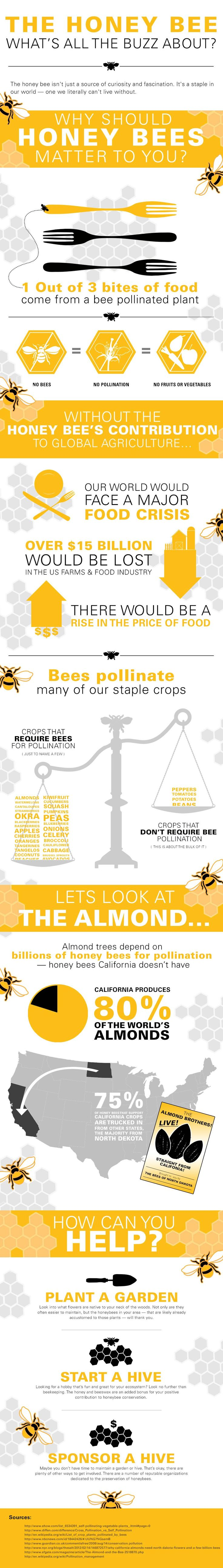 The Honey Bee: An Infographic | The Orkin Ecologist