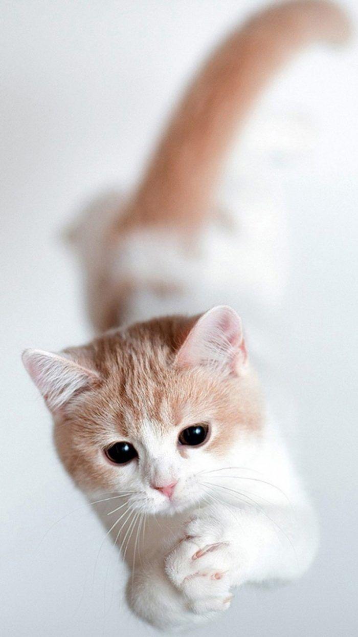 Cute Cat Iphone Wallpaper Binatang Anak Kucing Kucing