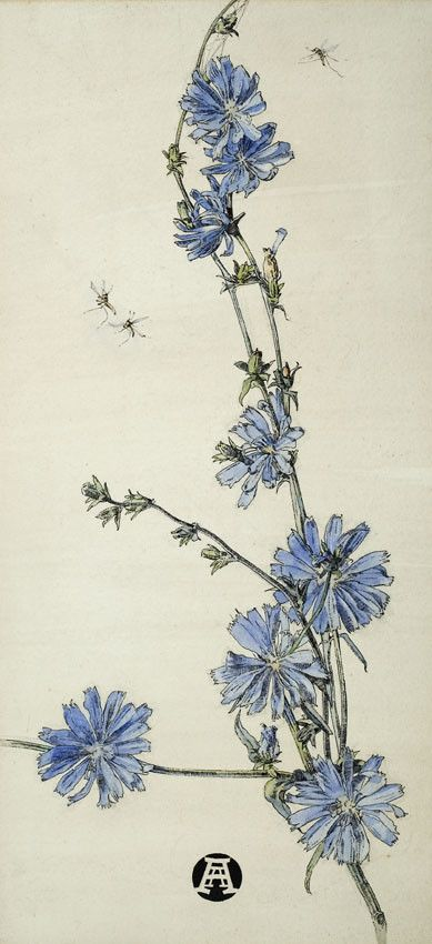 ANNA AIRY (1882-1964). SUCCORY, Watercolour and pen and ink, 38 x 17 cm.   http://www.sarahcolegrave.co.uk/artists/d/anna-airy/7276