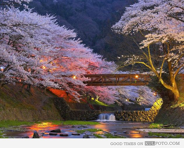 japanese cherry blossom waterfall cherry blossom trees in kyoto japan beautiful scenery of