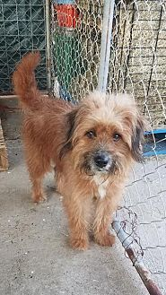 Terrier (Unknown Type, Small) Dog for adoption in Dickinson, Texas - OWNED-Tommy